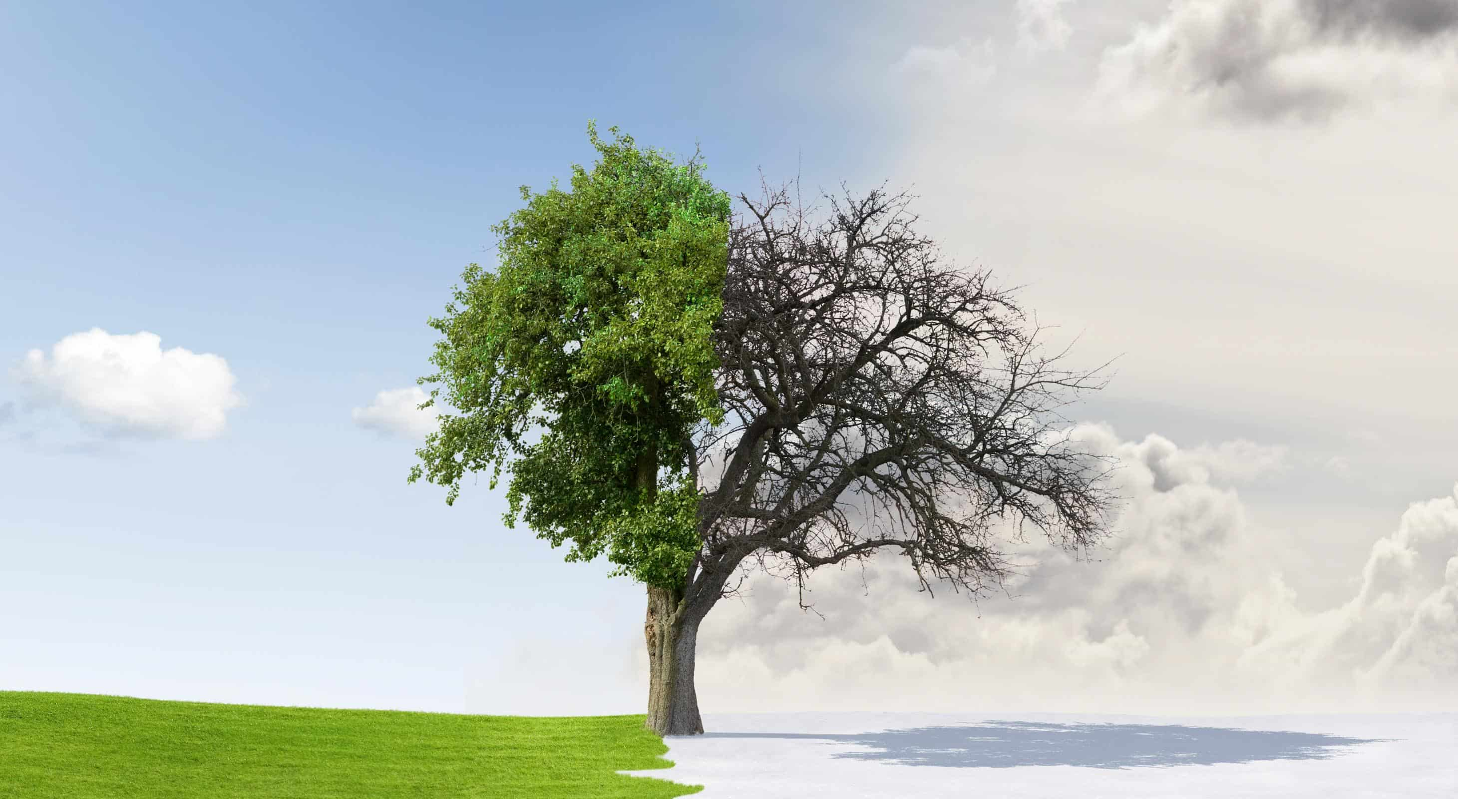 Tree 1/2 alive 1/2 dead - symbolizes PAII