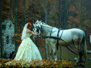 Bride and Horse - Wedding