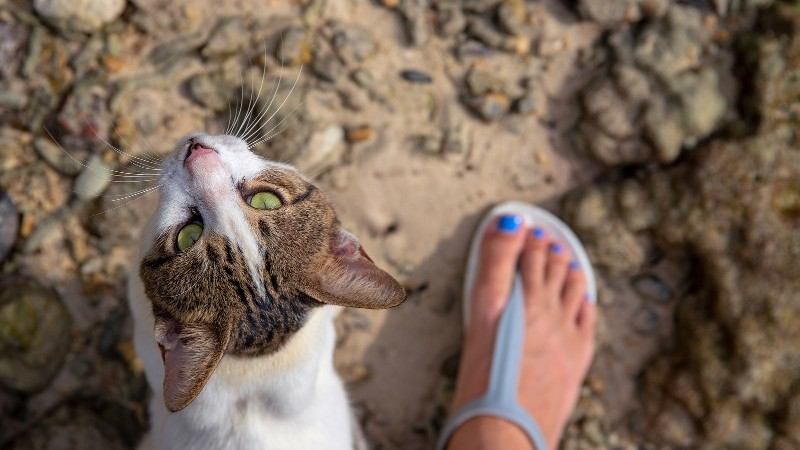 Kitty looking up at owner at the beach