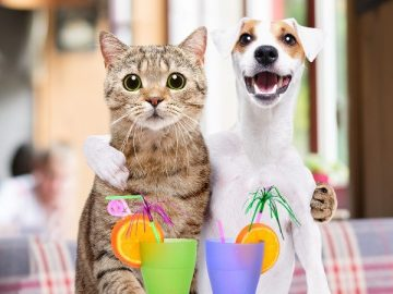 Fun package ideas for pets on vacation