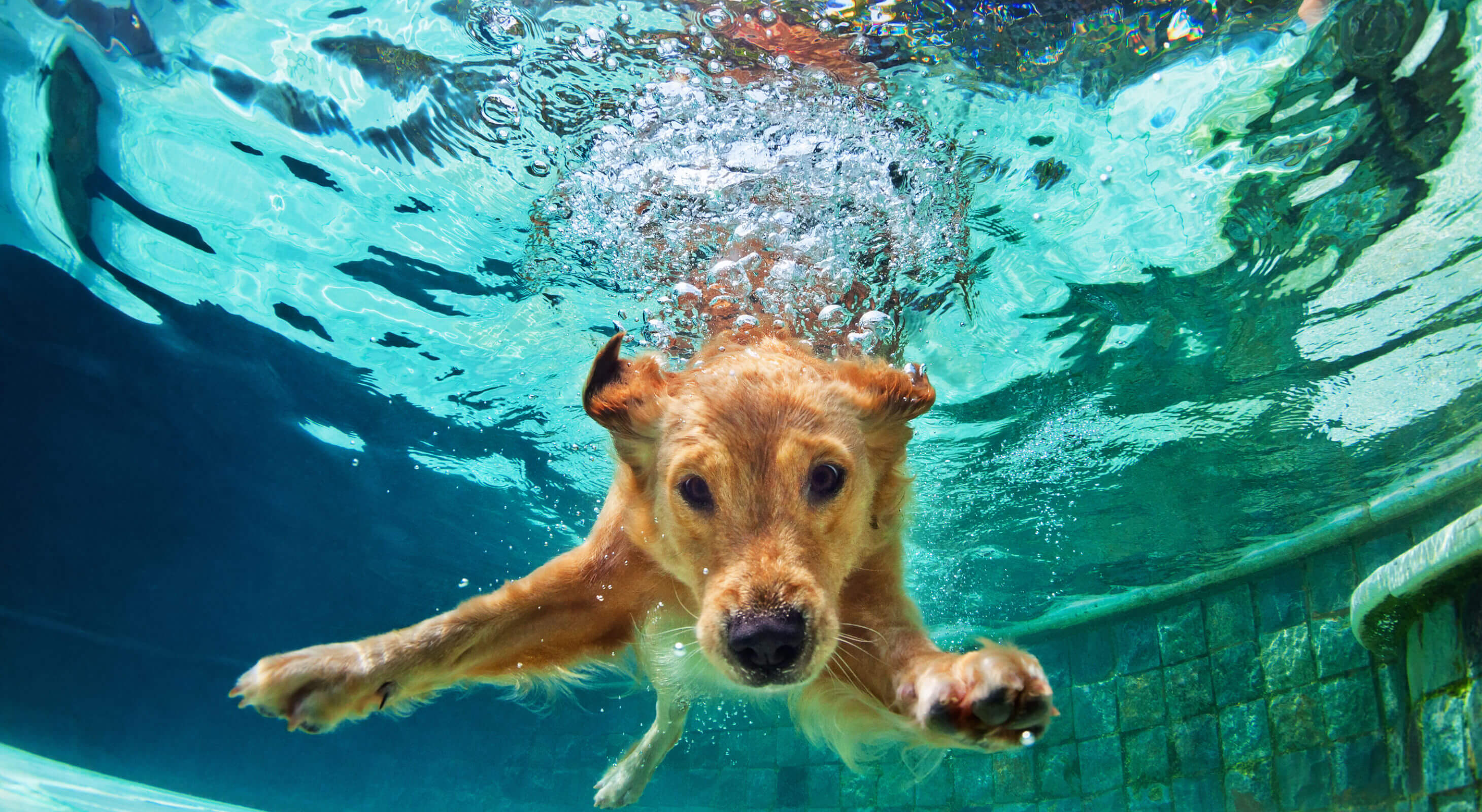 dog friendly hotel vacation - pet friendly marketing how to