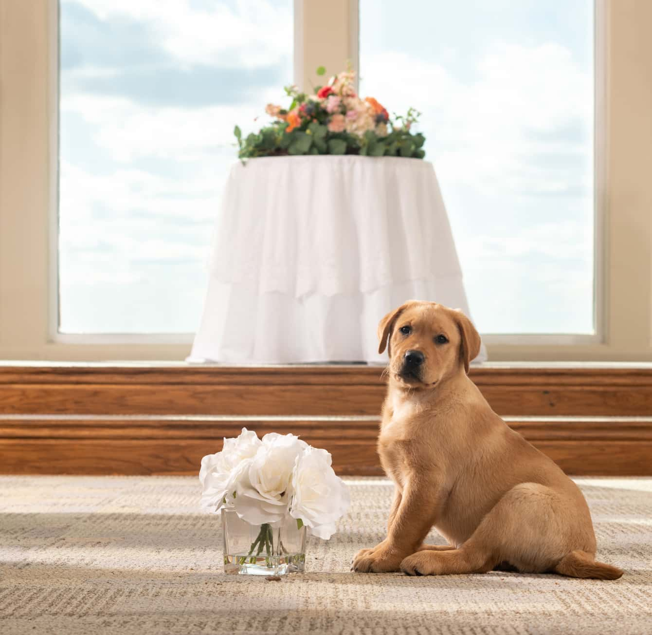 A brown puppy sitting in front of a flower looking at the camera - wedding websites