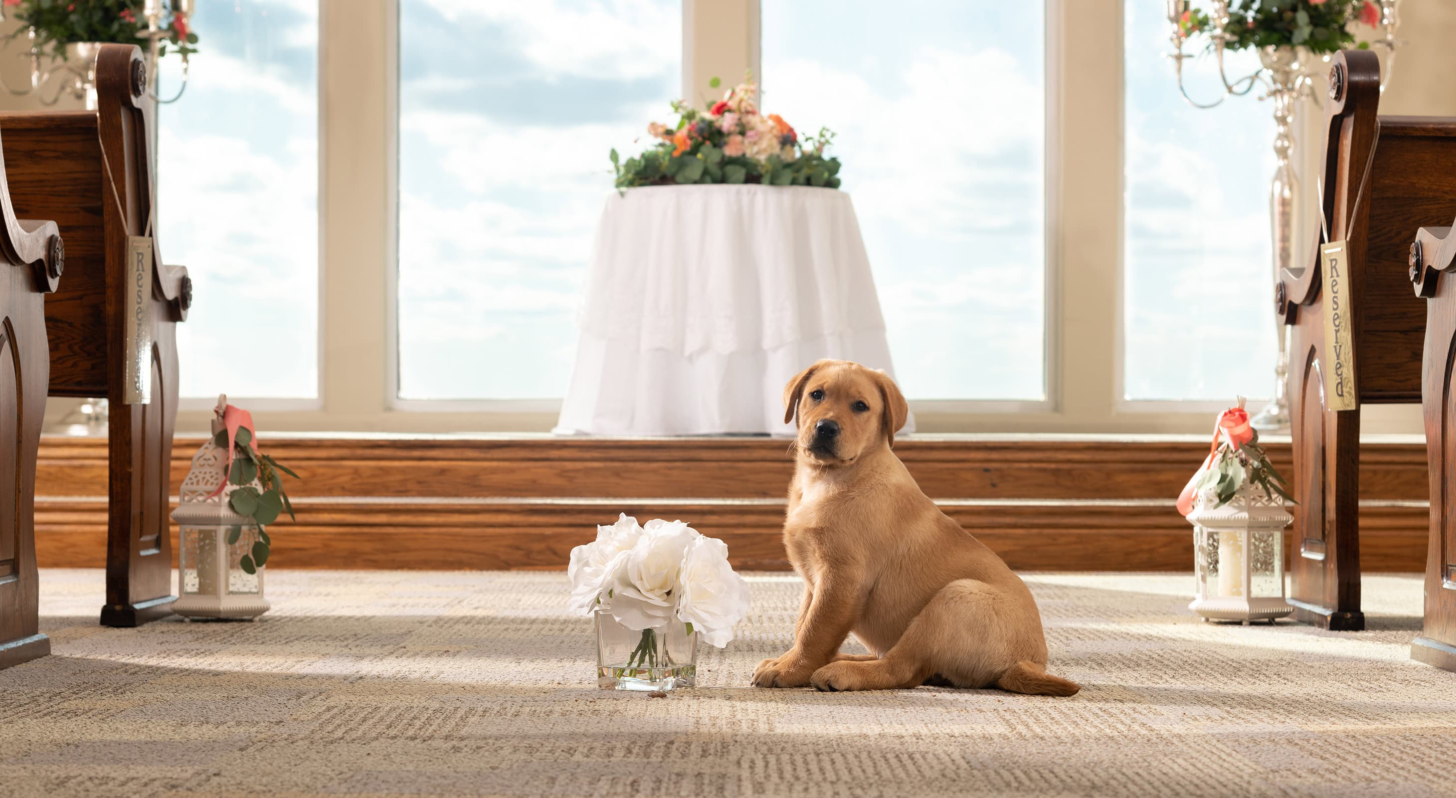 Puppy sitting in the aisle of a chapel