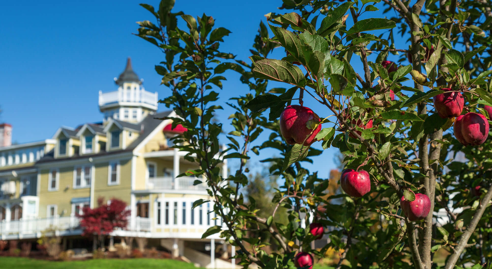 Romantic Maine inn with apple tree